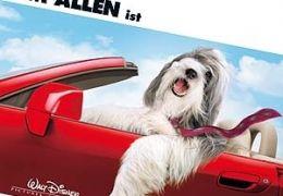 Shaggy Dog - Hör mal wer da bellt  Buena Vista...ermany