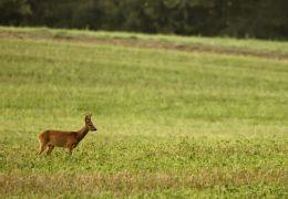 Auf der Jagd - Wem gehört die Natur? - Wildtiere auf...Feld