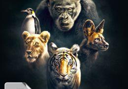 Wilde Dynastien - Die Clans der Tiere