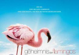 'Das Geheimnis der Flamingos'